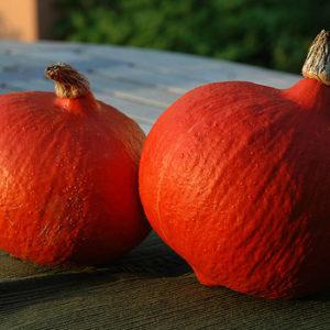 hokkaido-pumpkins