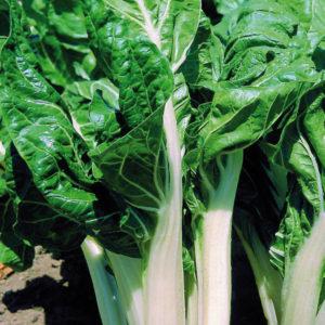 verde-da-costa-bianca