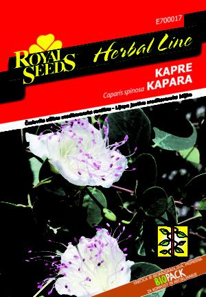 RS_Kapre_new